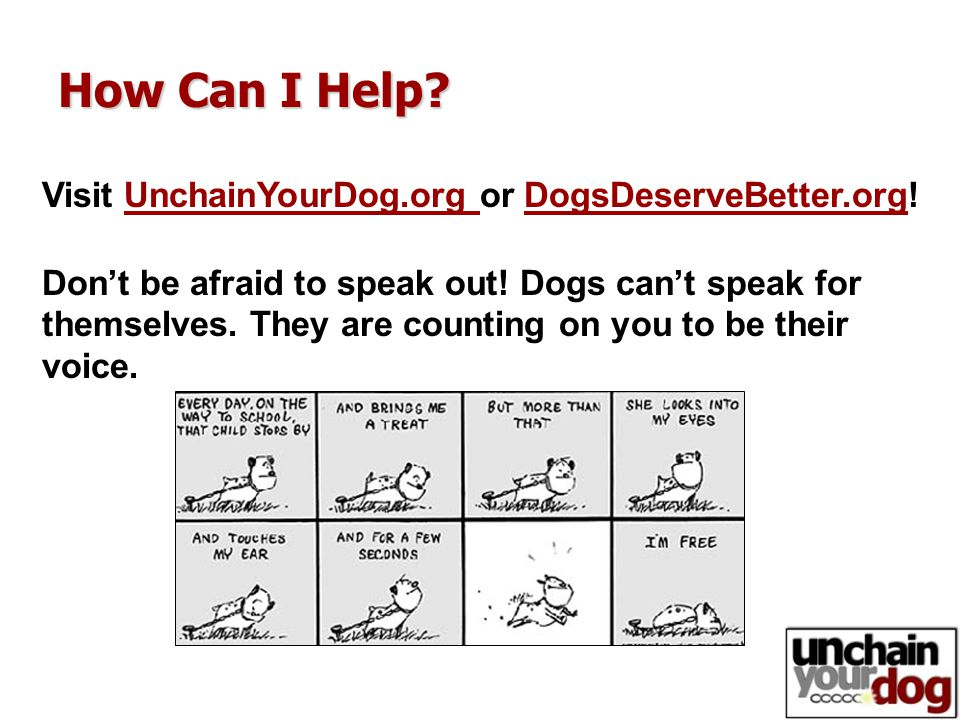 How Can I Help? Visit UnchainYourDog.org or DogsDeserveBetter.org! Don't be afraid to speak out! Dogs can't speak for themselves. They are counting on
