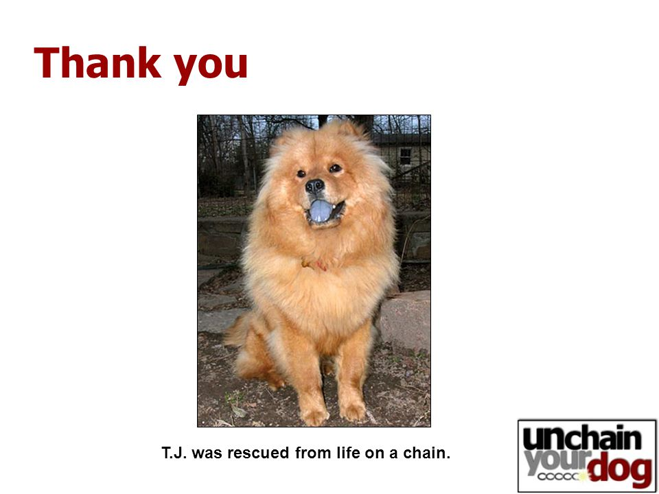 Thank you T.J. was rescued from life on a chain.