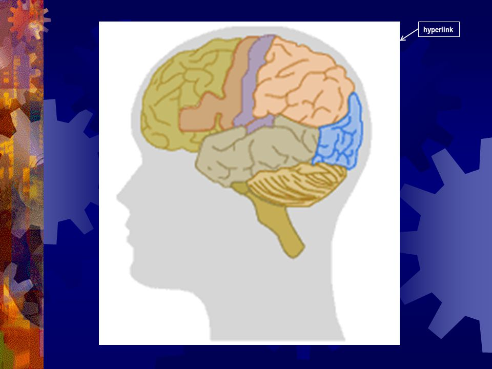 THE BRAIN! Before the classes on marijuana, we have already covered