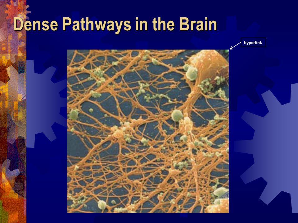 Pathways to the Brain hyperlink