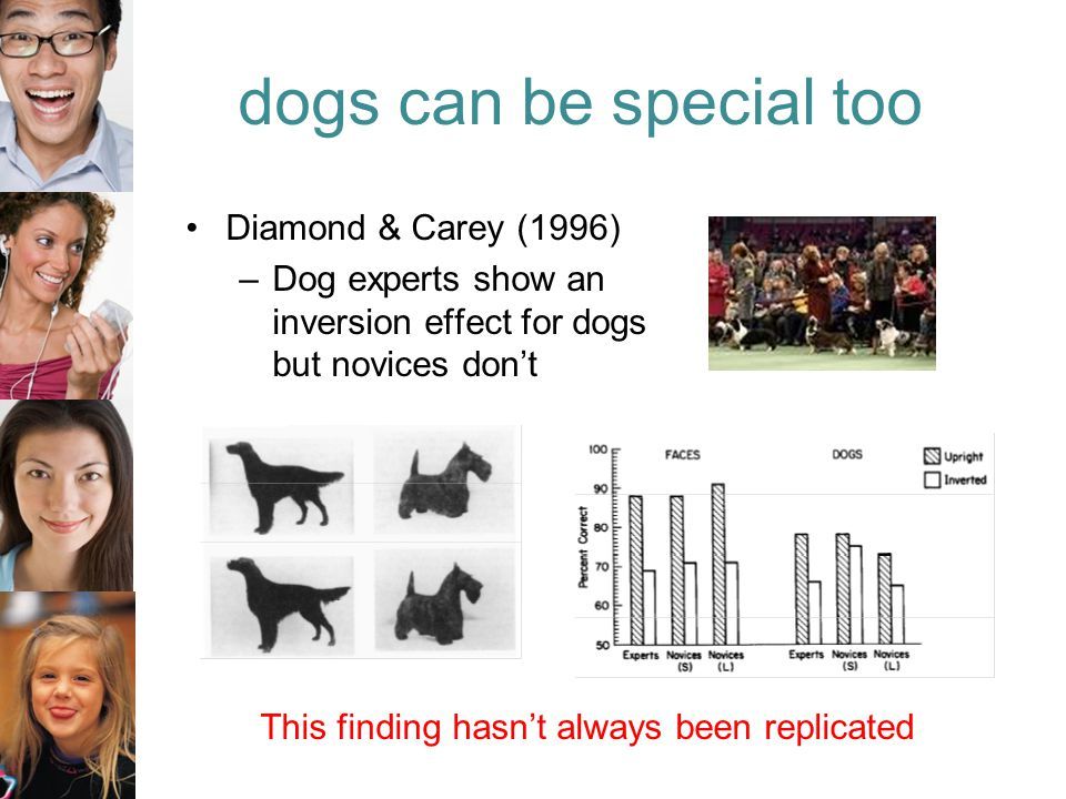 dogs can be special too Diamond & Carey (1996) –Dog experts show an inversion effect for dogs but novices don't This finding hasn't always been replicated