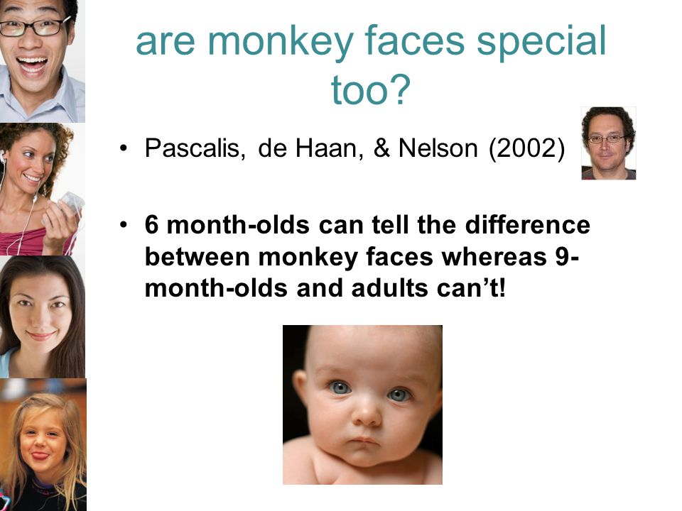 are monkey faces special too.