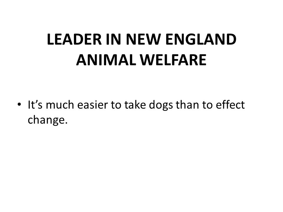 LEADER IN NEW ENGLAND ANIMAL WELFARE It's much easier to take dogs than to effect change.