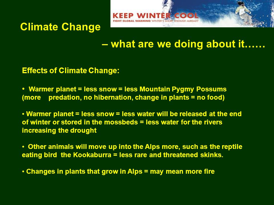 Climate Change – what are we doing about it…… Effects of Climate Change: Warmer planet = less snow = less Mountain Pygmy Possums (more predation, no hibernation, change in plants = no food) Warmer planet = less snow = less water will be released at the end of winter or stored in the mossbeds = less water for the rivers increasing the drought Other animals will move up into the Alps more, such as the reptile eating bird the Kookaburra = less rare and threatened skinks.