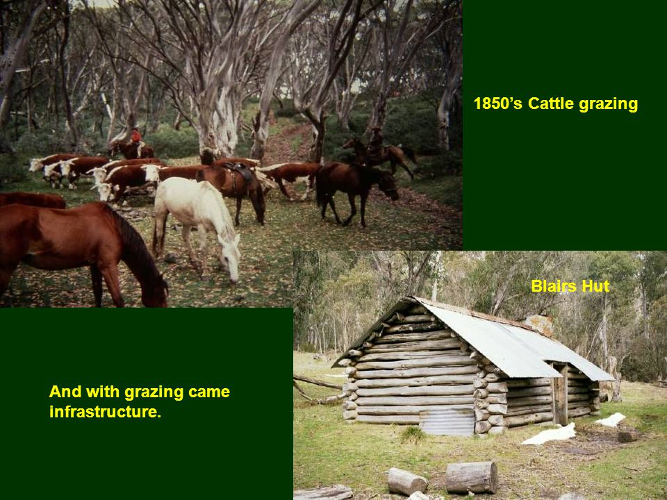 1850's Cattle grazing And with grazing came infrastructure. Blairs Hut