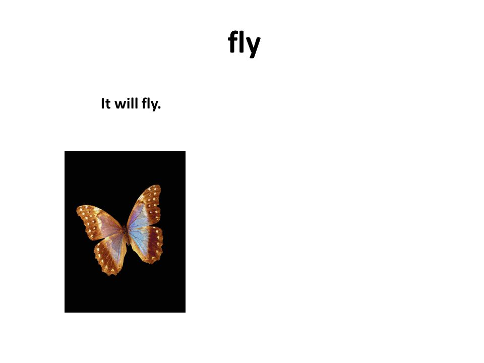 fly It will fly.