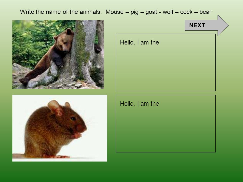 Hello, I am the Write the name of the animals. Mouse – pig – goat - wolf – cock – bear NEXT