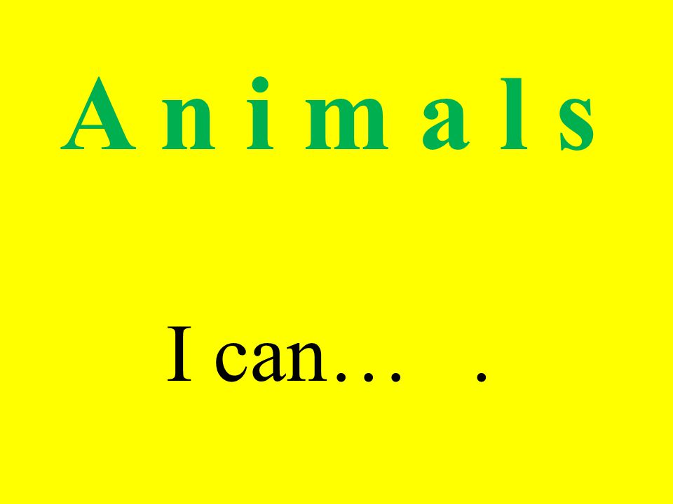 A n i m a l s I can….