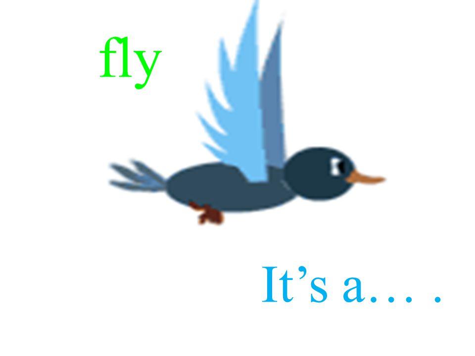 fly It's a….