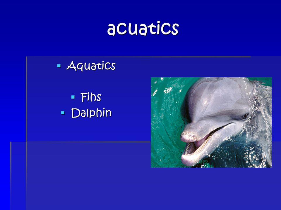 acuatics  Aquatics  Fihs  Dalphin