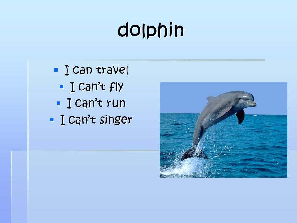 dolphin  I can travel  I can't fly  I can't run  I can't singer