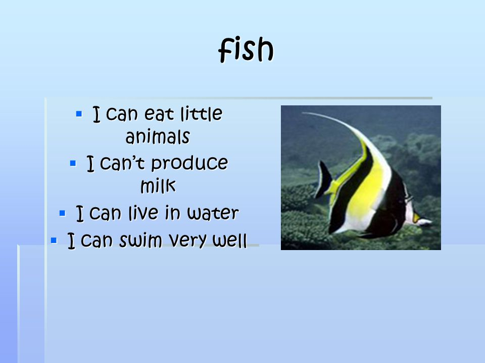 fish  I can eat little animals  I can't produce milk  I can live in water  I can swim very well