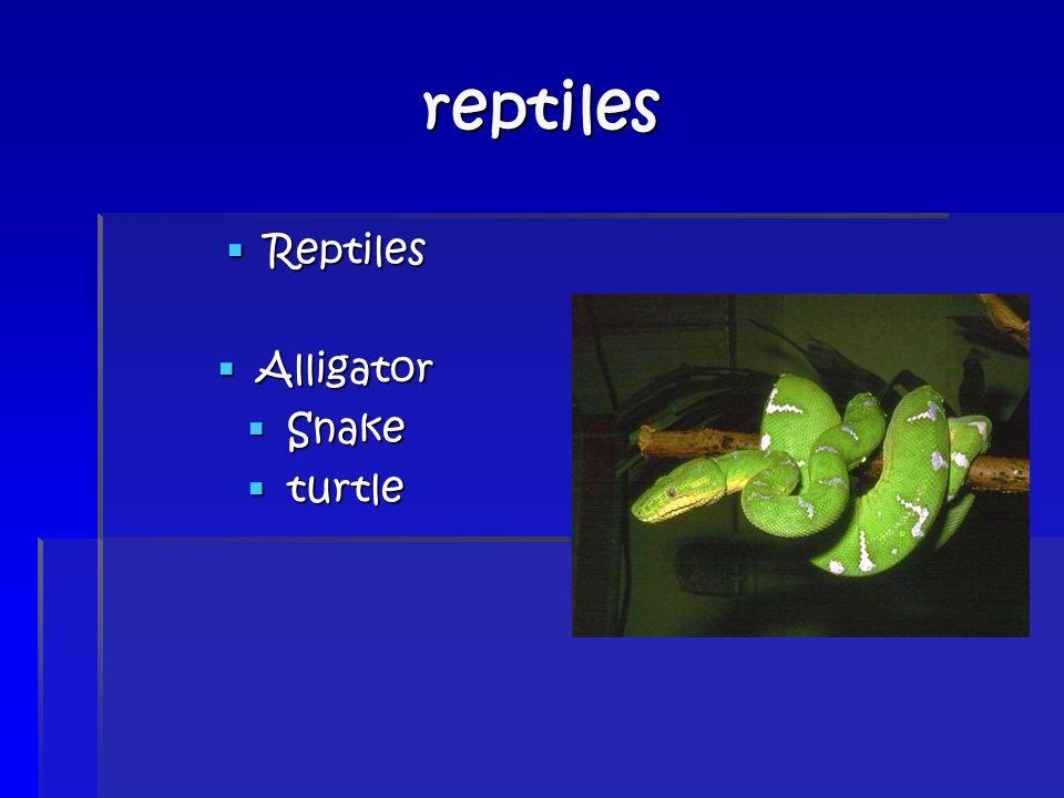 reptiles  Reptiles  Alligator  Snake  turtle