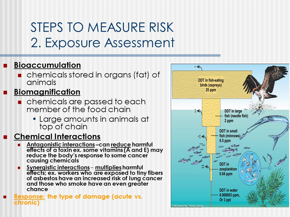 STEPS TO MEASURE RISK 2. Exposure Assessment Bioaccumulation chemicals stored in organs (fat) of animals Biomagnification chemicals are passed to each