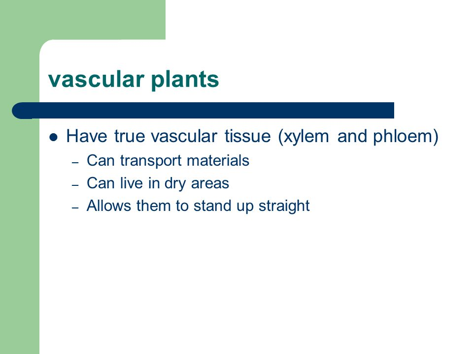 vascular plants Have true vascular tissue (xylem and phloem) – Can transport materials – Can live in dry areas – Allows them to stand up straight
