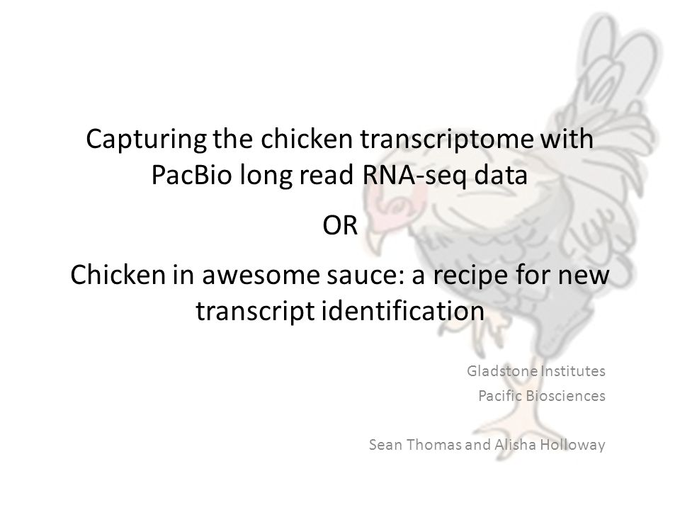 Capturing the chicken transcriptome with PacBio long read RNA-seq data OR Chicken in awesome sauce: a recipe for new transcript identification Gladstone Institutes Pacific Biosciences Sean Thomas and Alisha Holloway