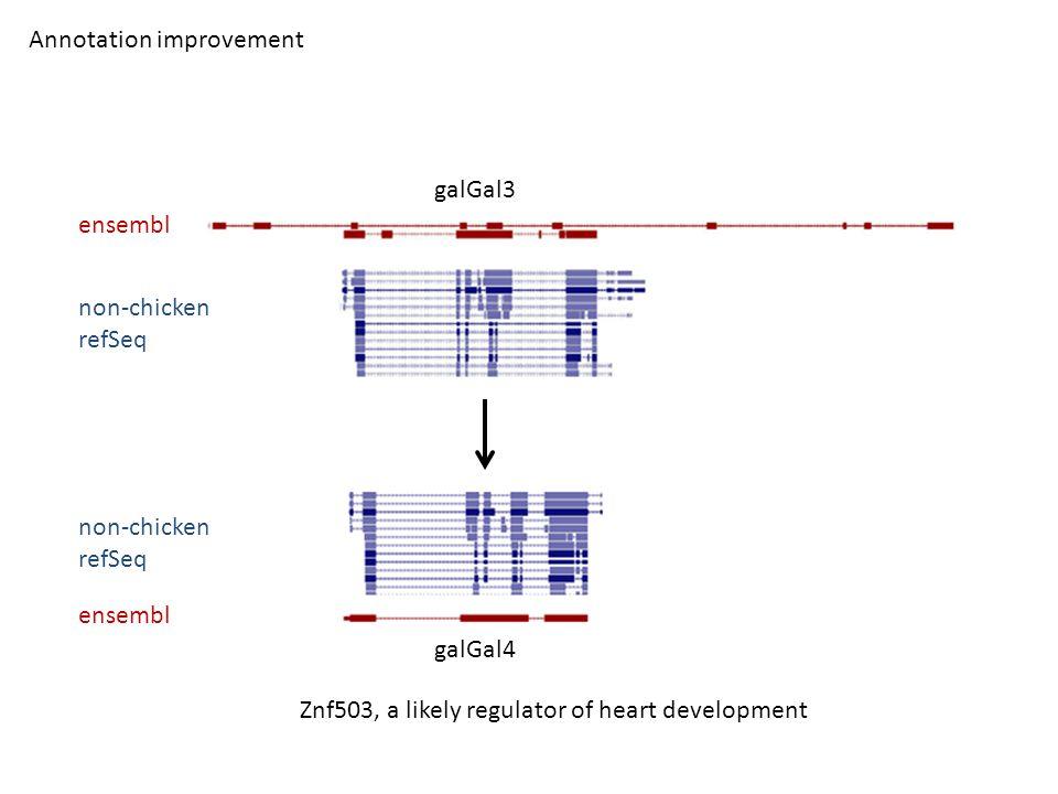 galGal3 galGal4 ensembl non-chicken refSeq Annotation improvement non-chicken refSeq Znf503, a likely regulator of heart development