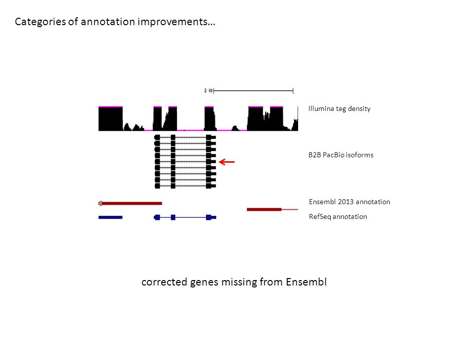 Categories of annotation improvements… B2B PacBio isoforms Ensembl 2013 annotation RefSeq annotation Illumina tag density corrected genes missing from Ensembl