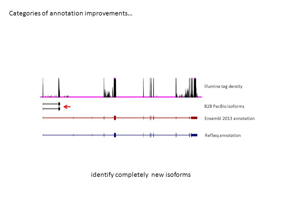 Categories of annotation improvements… B2B PacBio isoforms Ensembl 2013 annotation RefSeq annotation Illumina tag density identify completely new isoforms