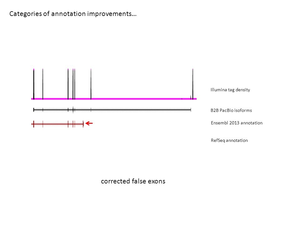 Categories of annotation improvements… B2B PacBio isoforms Ensembl 2013 annotation RefSeq annotation Illumina tag density corrected false exons