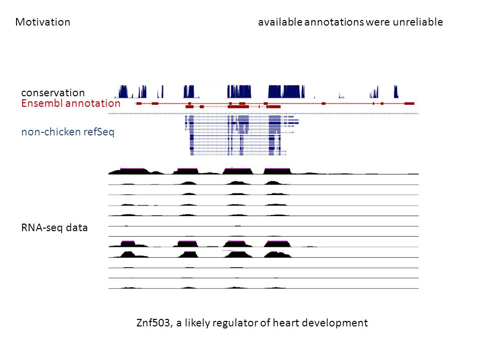 Motivation available annotations were unreliable conservation Ensembl annotation non-chicken refSeq RNA-seq data Znf503, a likely regulator of heart d