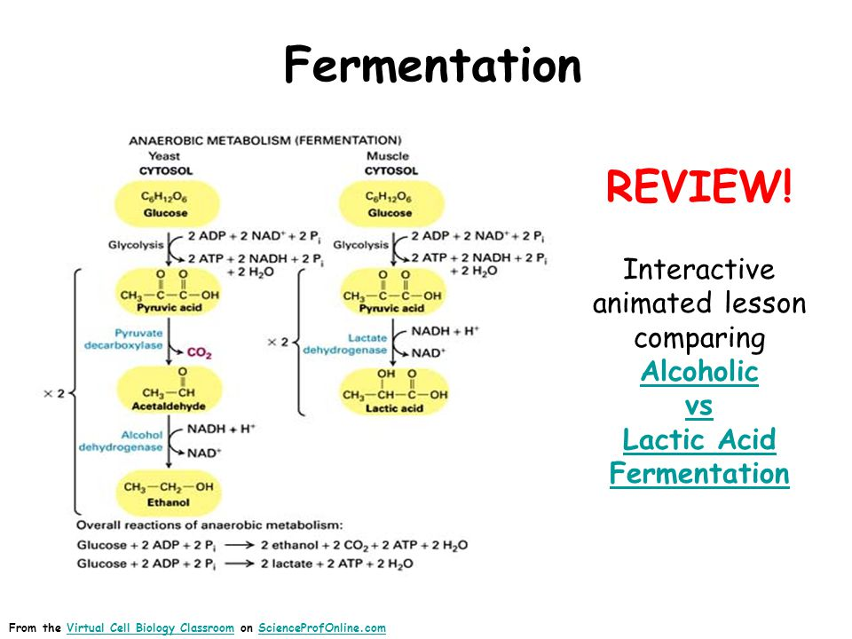 Fermentation From the Virtual Cell Biology Classroom on ScienceProfOnline.comVirtual Cell Biology ClassroomScienceProfOnline.com REVIEW! Interactive a
