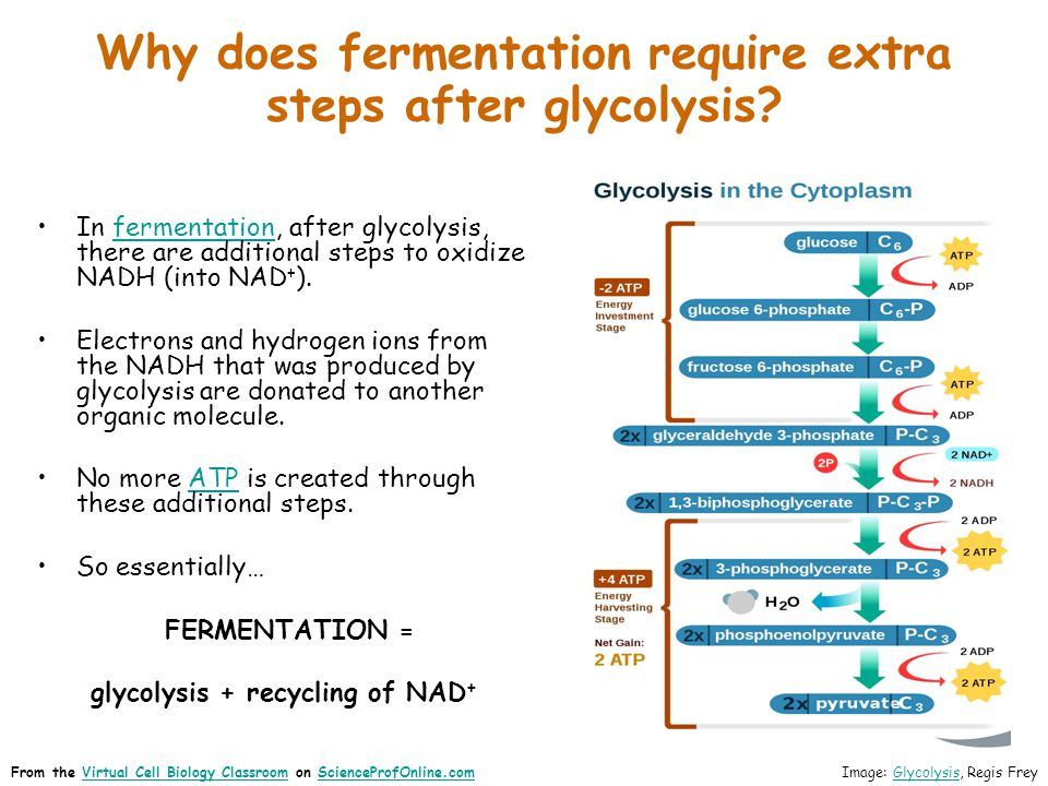 Why does fermentation require extra steps after glycolysis? In fermentation, after glycolysis, there are additional steps to oxidize NADH (into NAD +