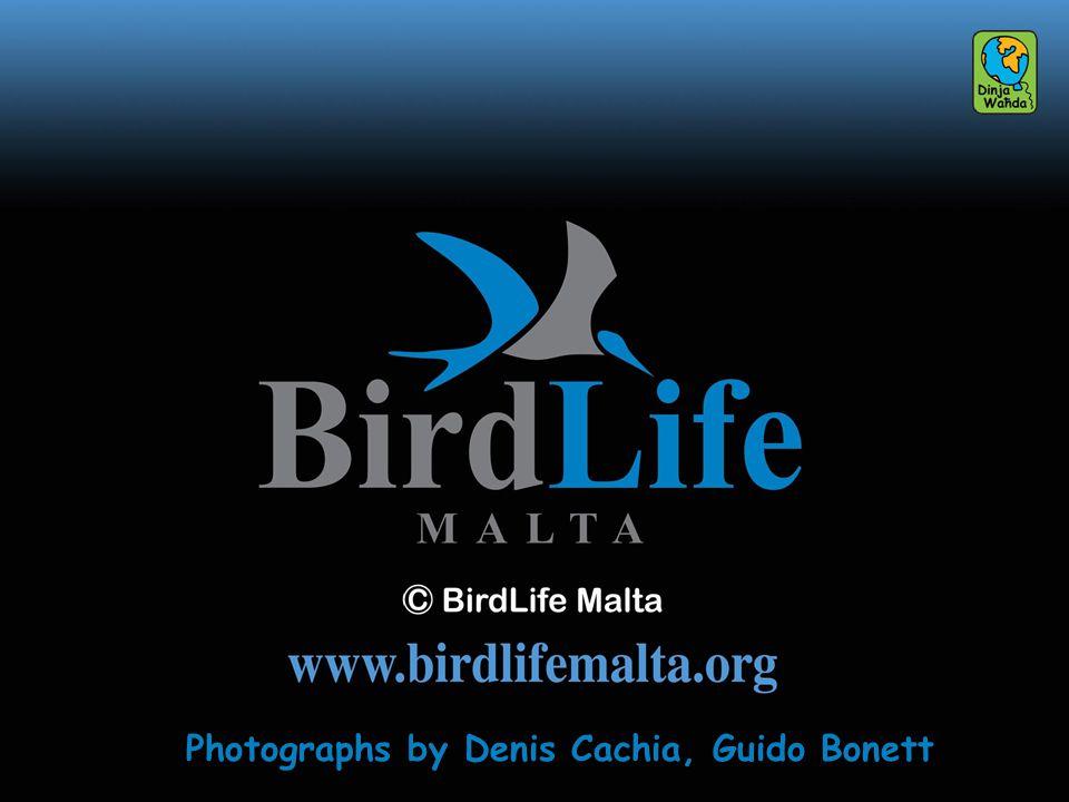 Photographs by Denis Cachia, Guido Bonett