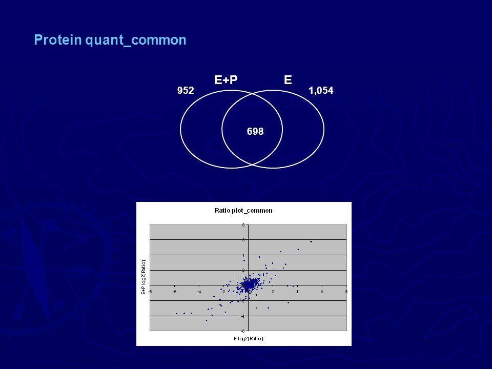 698 E+PE 9521,054 Protein quant_common