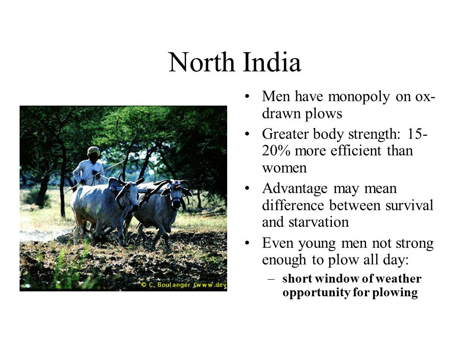 North India Men have monopoly on ox- drawn plows Greater body strength: 15- 20% more efficient than women Advantage may mean difference between surviv