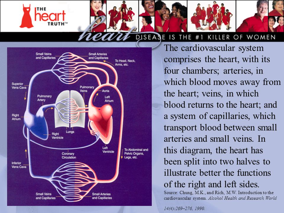 The cardiovascular system comprises the heart, with its four chambers; arteries, in which blood moves away from the heart; veins, in which blood retur