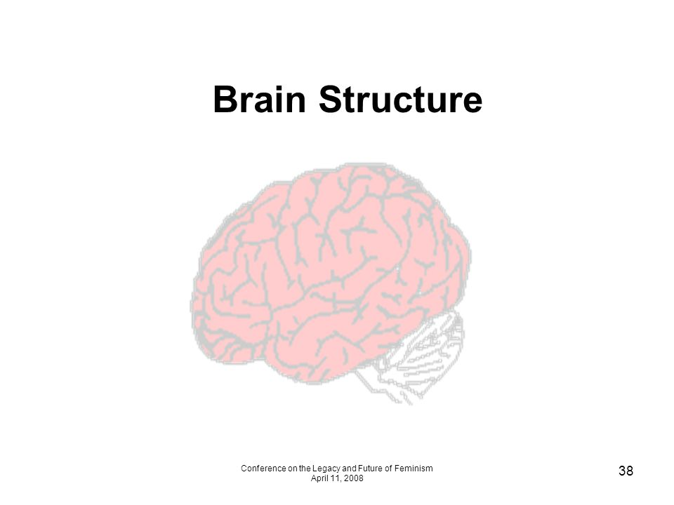 Conference on the Legacy and Future of Feminism April 11, 2008 38 Brain Structure
