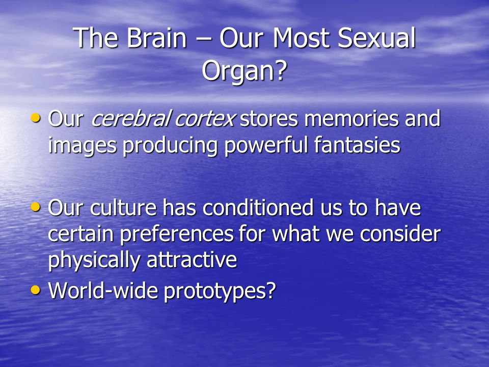 The Brain – Our Most Sexual Organ? Our cerebral cortex stores memories and images producing powerful fantasies Our cerebral cortex stores memories and