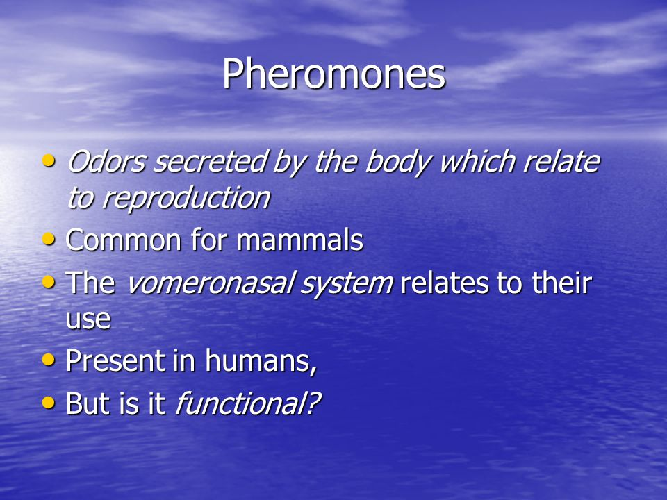 Pheromones Odors secreted by the body which relate to reproduction Odors secreted by the body which relate to reproduction Common for mammals Common f