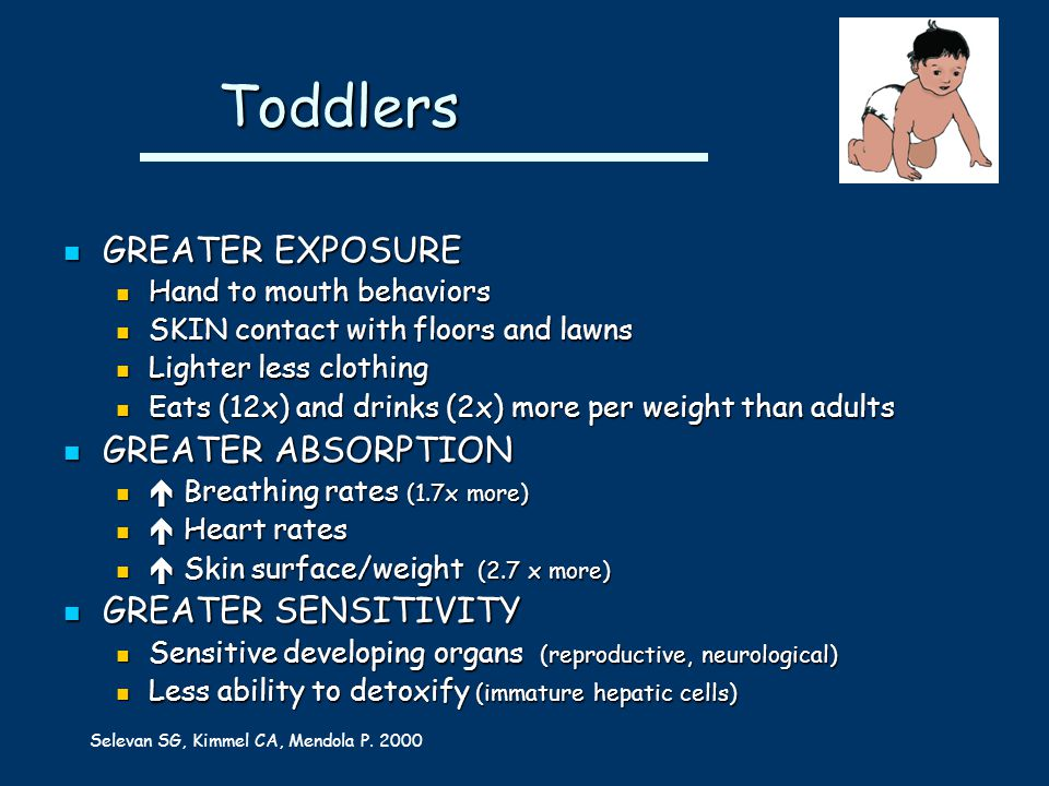 Toddlers Toddlers GREATER EXPOSURE GREATER EXPOSURE Hand to mouth behaviors Hand to mouth behaviors SKIN contact with floors and lawns SKIN contact with floors and lawns Lighter less clothing Lighter less clothing Eats (12x) and drinks (2x) more per weight than adults Eats (12x) and drinks (2x) more per weight than adults GREATER ABSORPTION GREATER ABSORPTION  Breathing rates (1.7x more)  Breathing rates (1.7x more)  Heart rates  Heart rates  Skin surface/weight (2.7 x more)  Skin surface/weight (2.7 x more) GREATER SENSITIVITY GREATER SENSITIVITY Sensitive developing organs (reproductive, neurological) Sensitive developing organs (reproductive, neurological) Less ability to detoxify (immature hepatic cells) Less ability to detoxify (immature hepatic cells) Selevan SG, Kimmel CA, Mendola P.