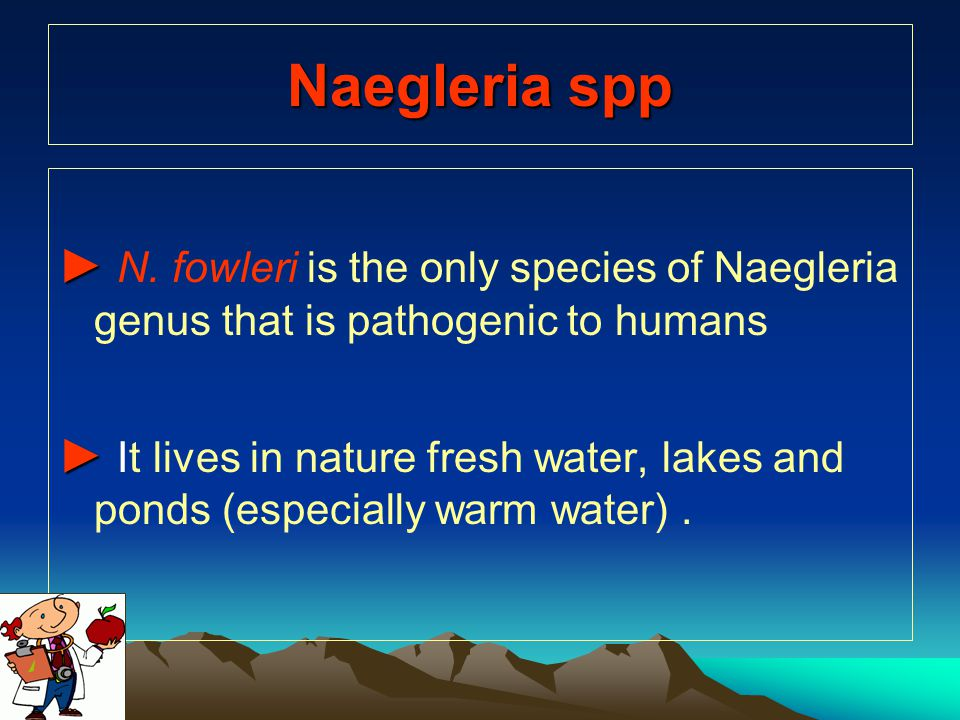 Naegleria spp ► ► N. fowleri is the only species of Naegleria genus that is pathogenic to humans ► ► It lives in nature fresh water, lakes and ponds (