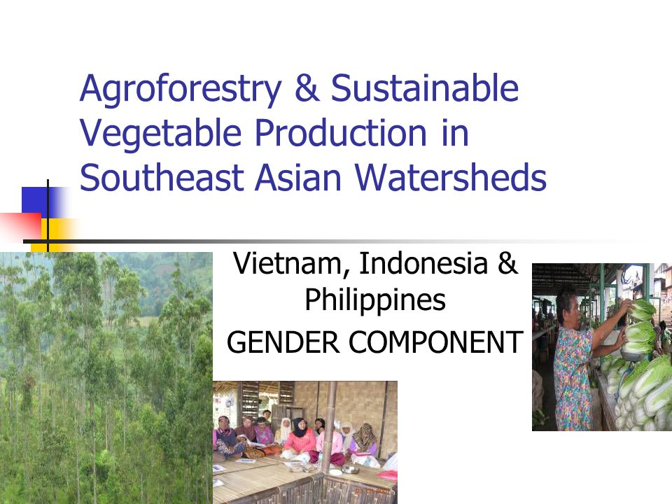 Agroforestry & Sustainable Vegetable Production in Southeast Asian Watersheds Vietnam, Indonesia & Philippines GENDER COMPONENT