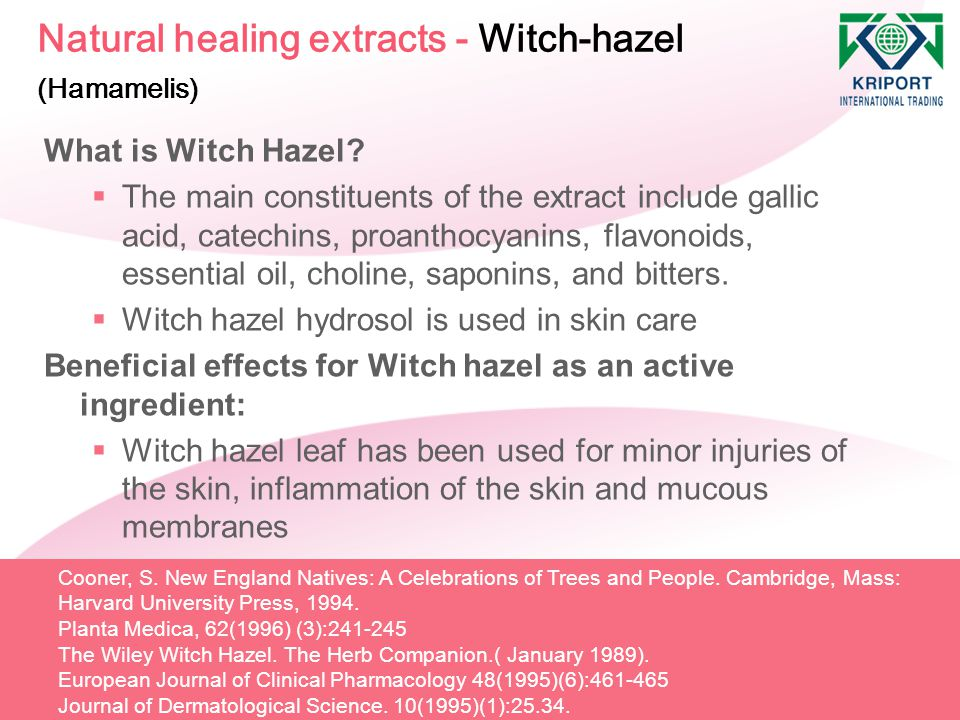 Natural healing extracts - Witch-hazel (Hamamelis) What is Witch Hazel?  The main constituents of the extract include gallic acid, catechins, proanth