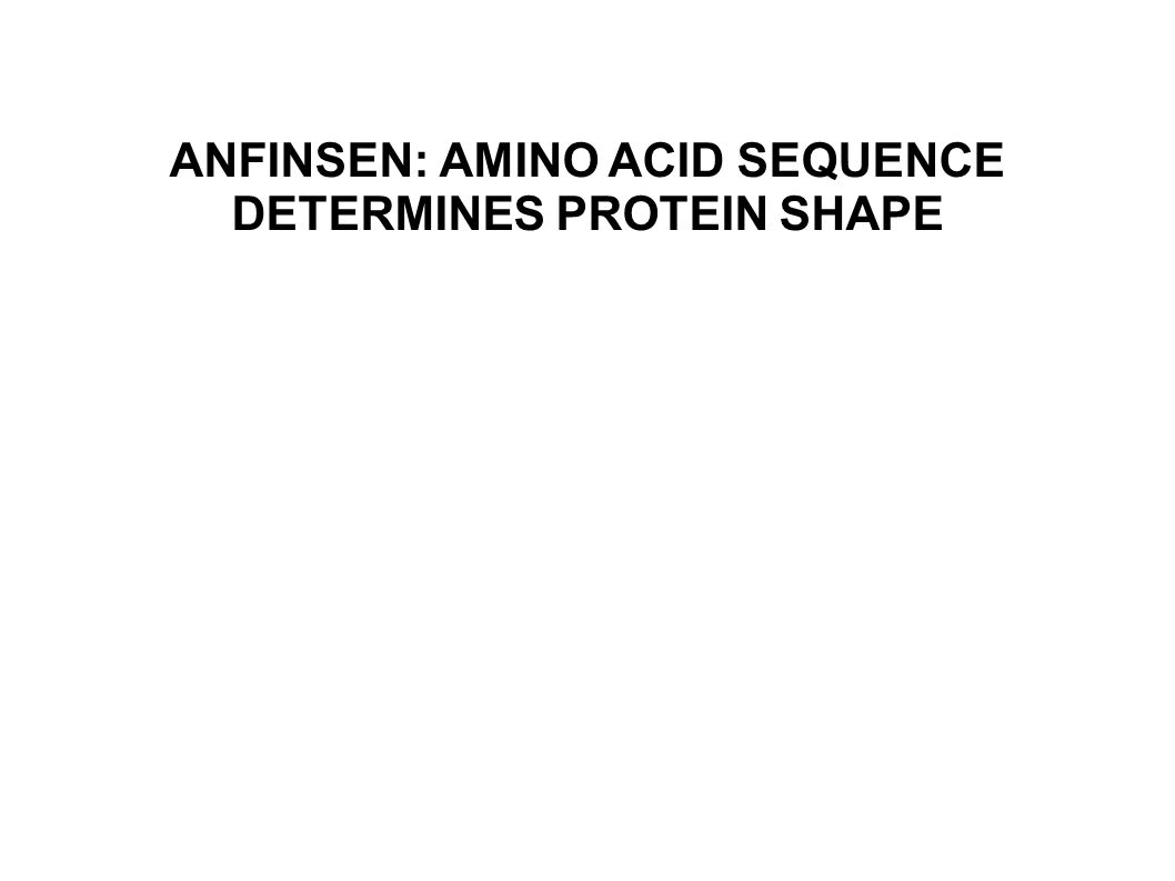 ANFINSEN: AMINO ACID SEQUENCE DETERMINES PROTEIN SHAPE
