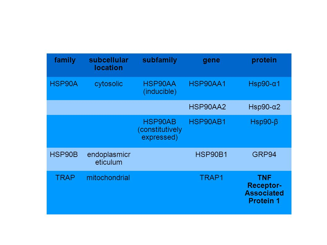 familysubcellular location subfamilygeneprotein HSP90AcytosolicHSP90AA (inducible) HSP90AA1Hsp90-α1 HSP90AA2Hsp90-α2 HSP90AB (constitutively expressed) HSP90AB1Hsp90-β HSP90Bendoplasmicr eticulum HSP90B1GRP94 TRAPmitochondrialTRAP1TNF Receptor- Associated Protein 1