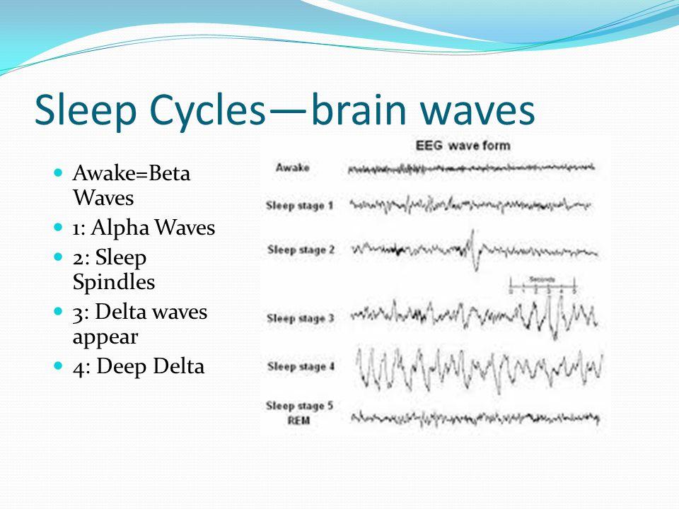 Sleep Cycles—brain waves Awake=Beta Waves 1: Alpha Waves 2: Sleep Spindles 3: Delta waves appear 4: Deep Delta