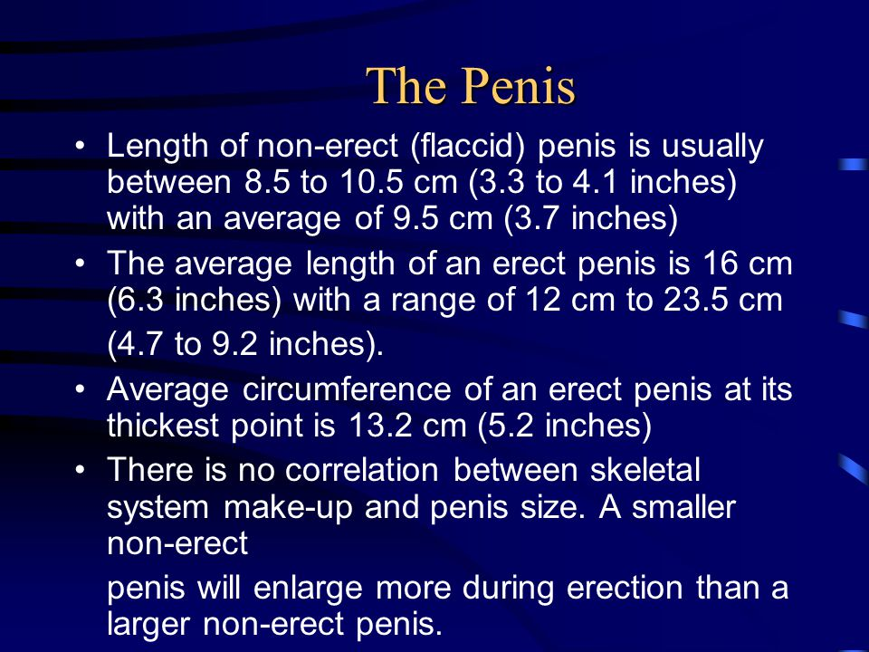 The Penis Length of non-erect (flaccid) penis is usually between 8.5 to 10.5 cm (3.3 to 4.1 inches) with an average of 9.5 cm (3.7 inches) The average