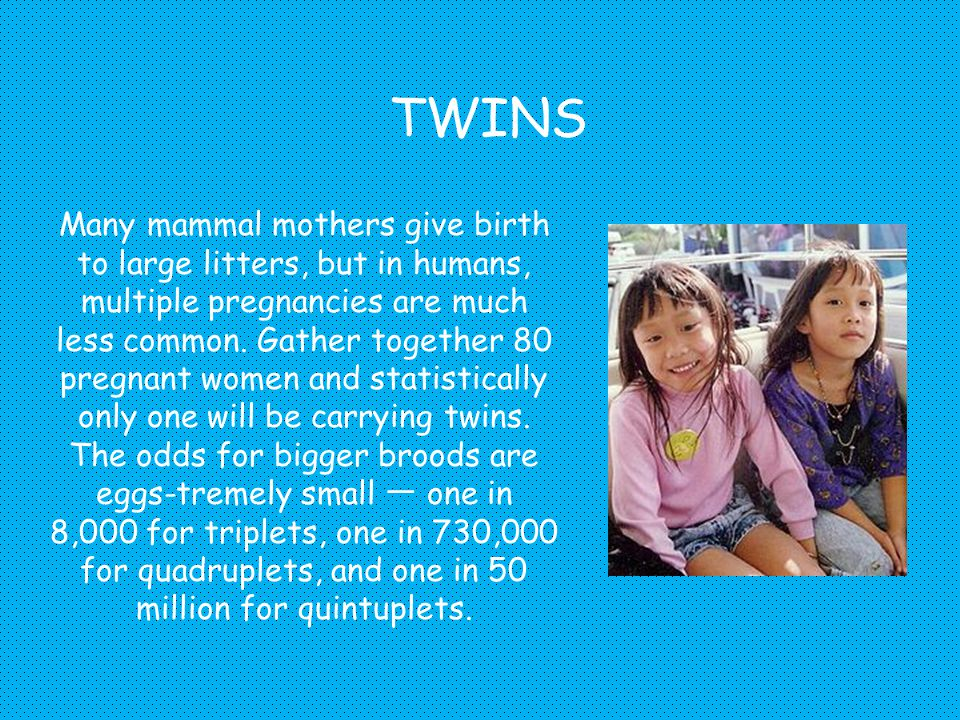 TWINS Many mammal mothers give birth to large litters, but in humans, multiple pregnancies are much less common.