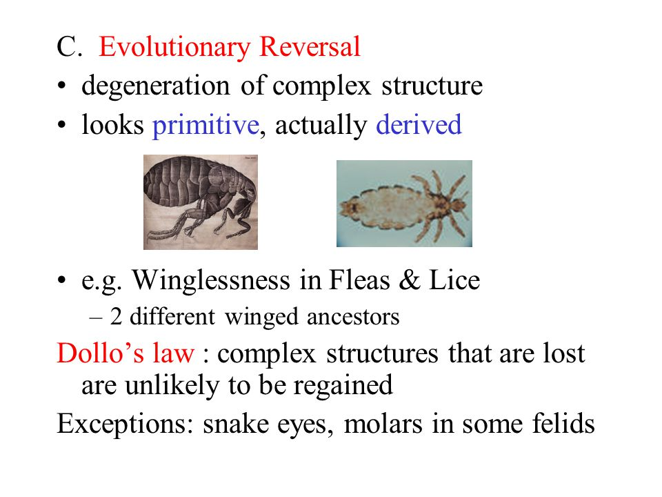 C.Evolutionary Reversal degeneration of complex structure looks primitive, actually derived e.g.