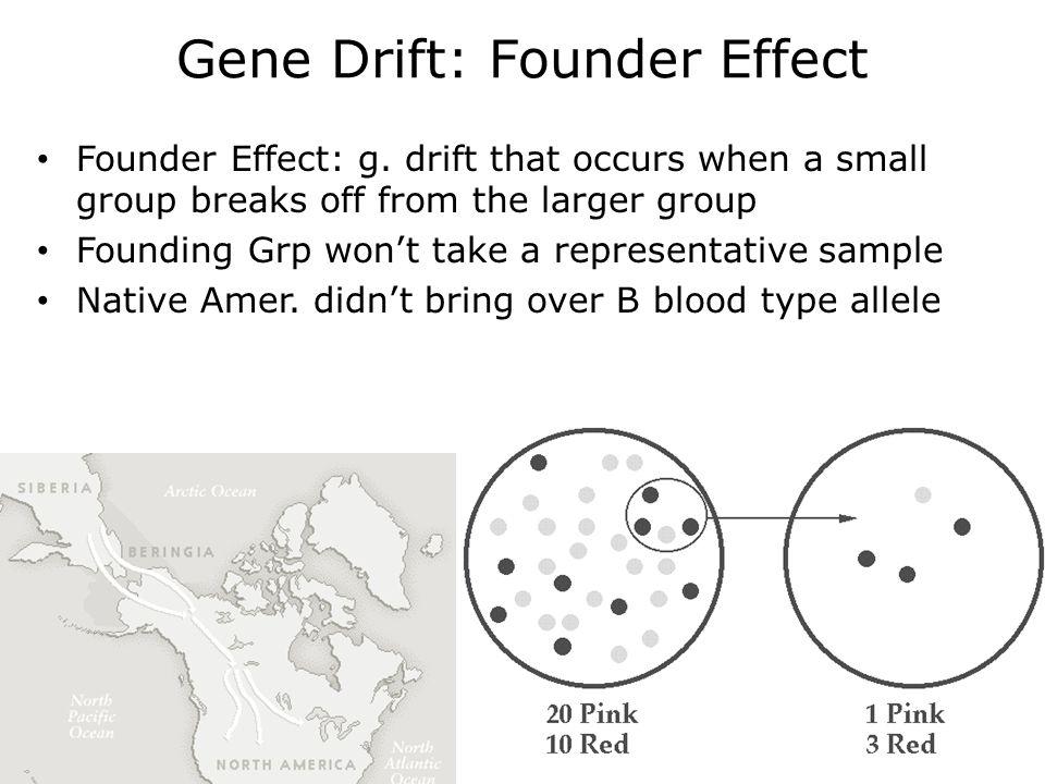 Gene Drift: Founder Effect Founder Effect: g.