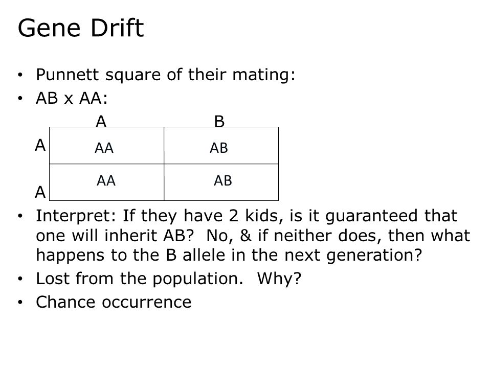 Gene Drift Punnett square of their mating: AB x AA: AB A A Interpret: If they have 2 kids, is it guaranteed that one will inherit AB? No, & if neither