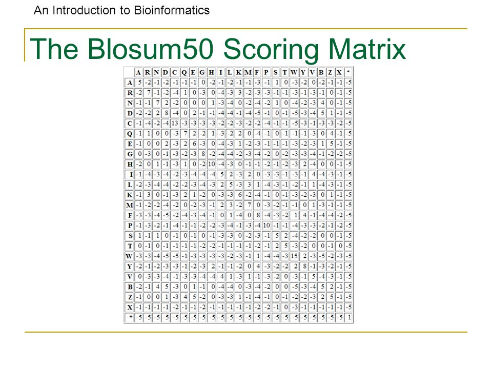 An Introduction to Bioinformatics The Blosum50 Scoring Matrix