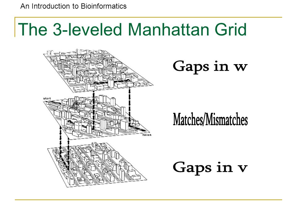 An Introduction to Bioinformatics The 3-leveled Manhattan Grid