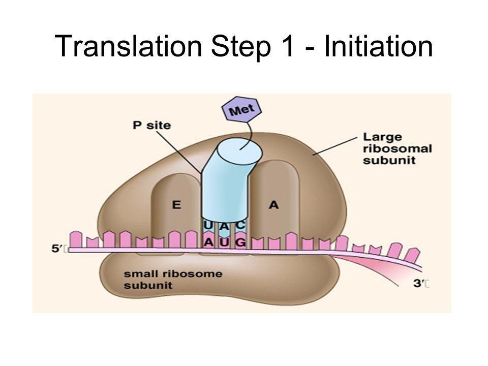 Translation Step 1 - Initiation