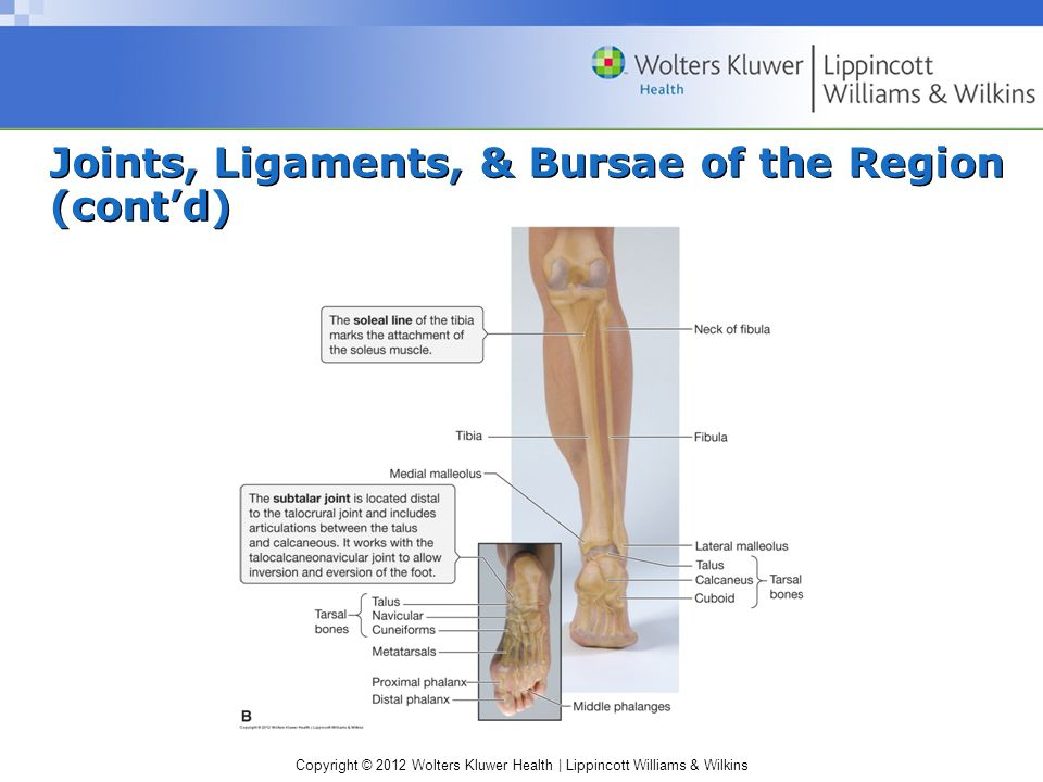Copyright © 2012 Wolters Kluwer Health | Lippincott Williams & Wilkins Joints, Ligaments, & Bursae of the Region (cont'd)